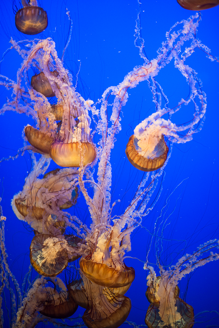 Monterey Bay Aquarium | The Style Scribe