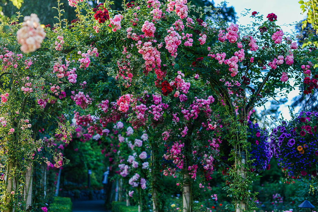 Butchart Gardens, Victoria | The Style Scribe