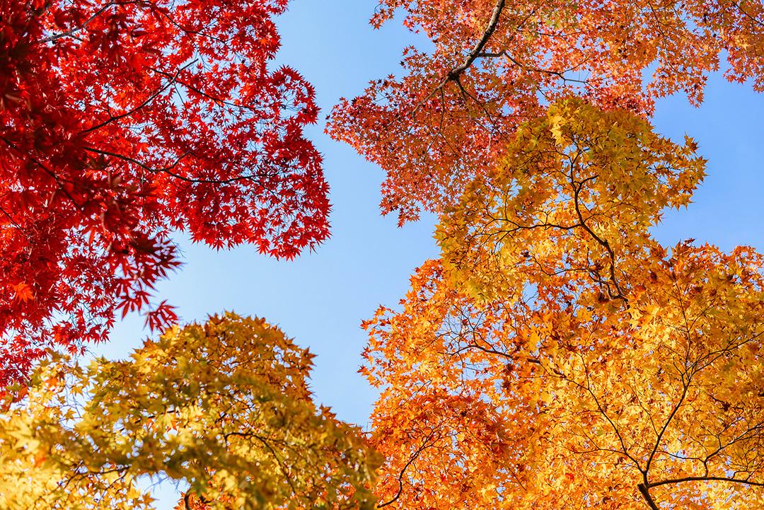 Autumn in Arashiyama, Kyoto   The Style Scribe