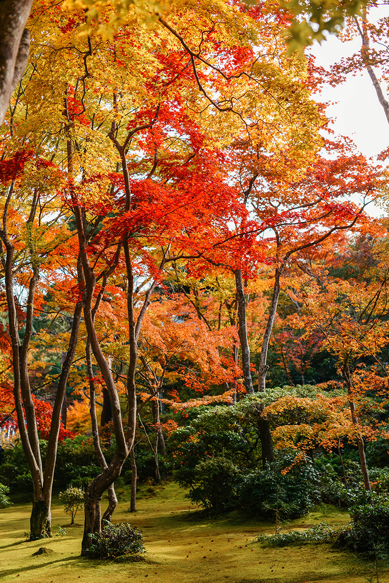 Autumn in Arashiyama, Kyoto | The Style Scribe