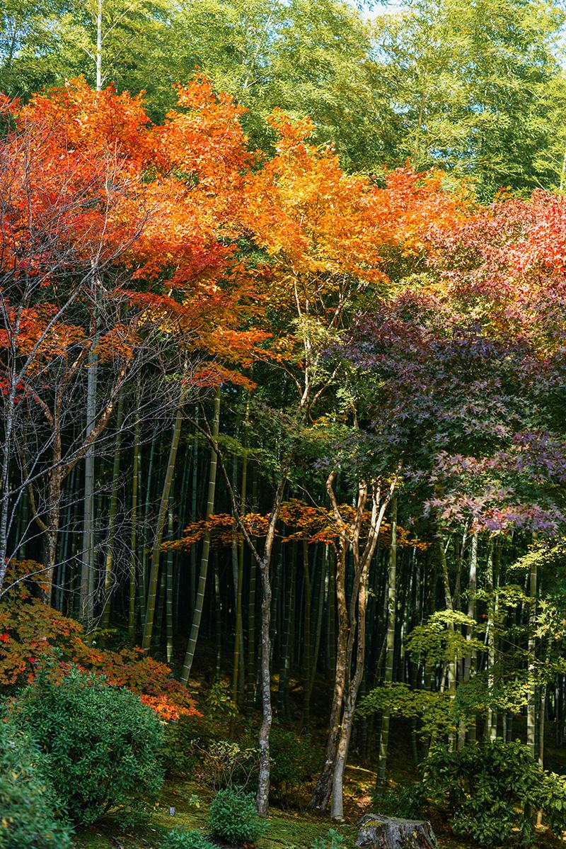 Bamboo Forest, Arashiyama | The Style Scribe