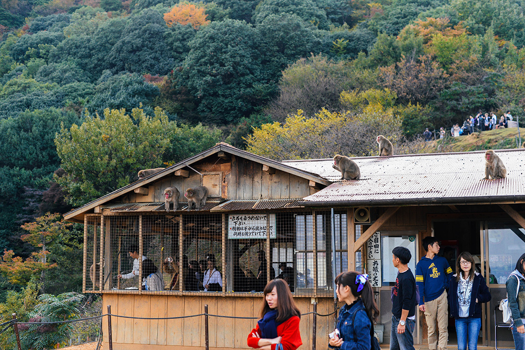 Monkey Park, Kyoto | The Style Scribe
