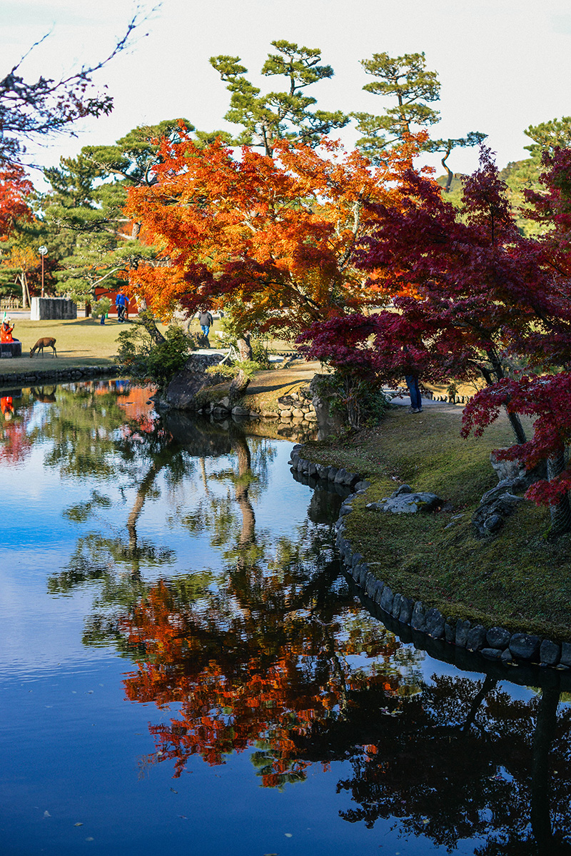 Autumn Photography in Nara, Japan