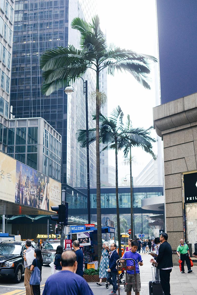 hong kong city center