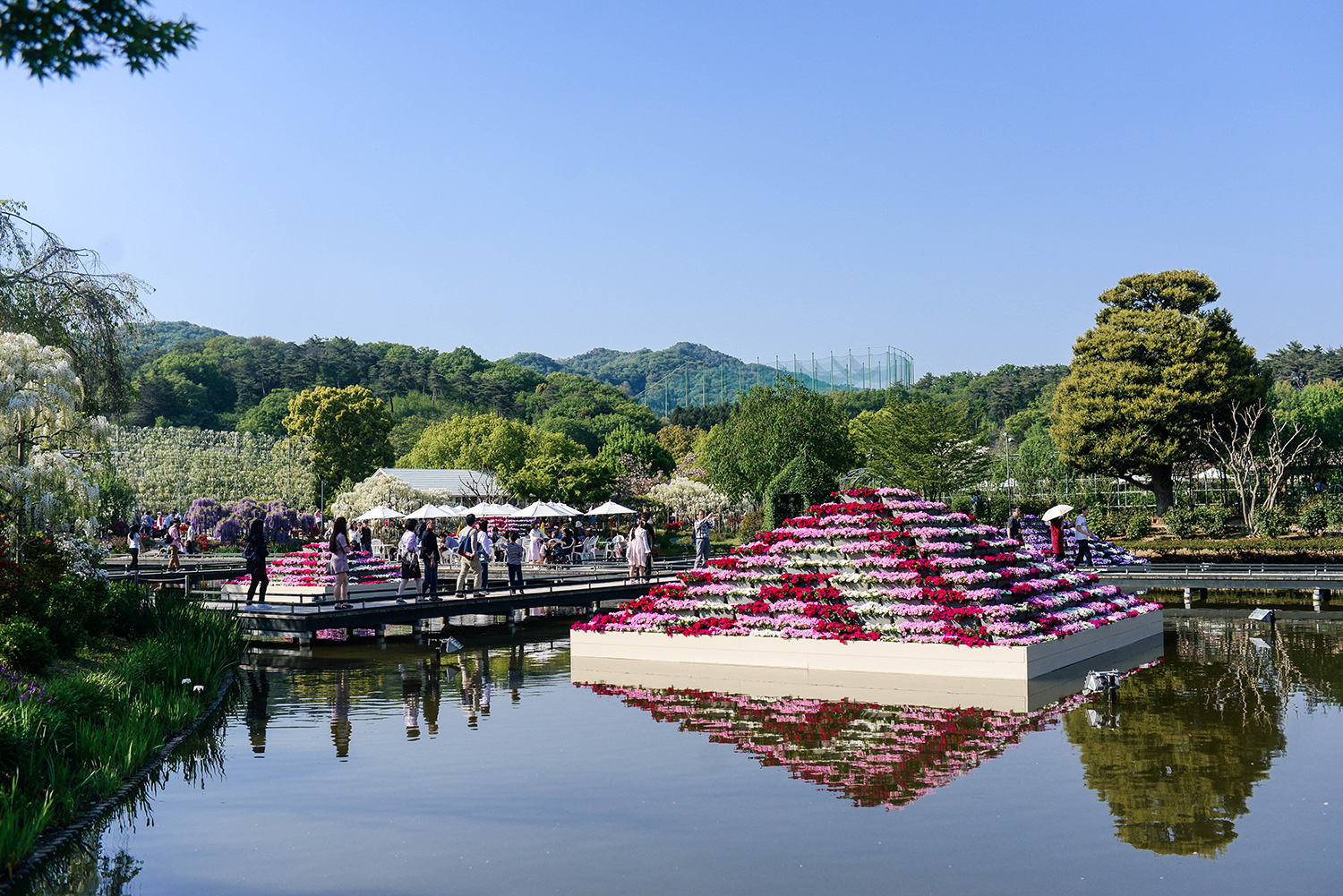 Tips for Visiting Ashikaga Flower Park in Japan | The Style Scribe