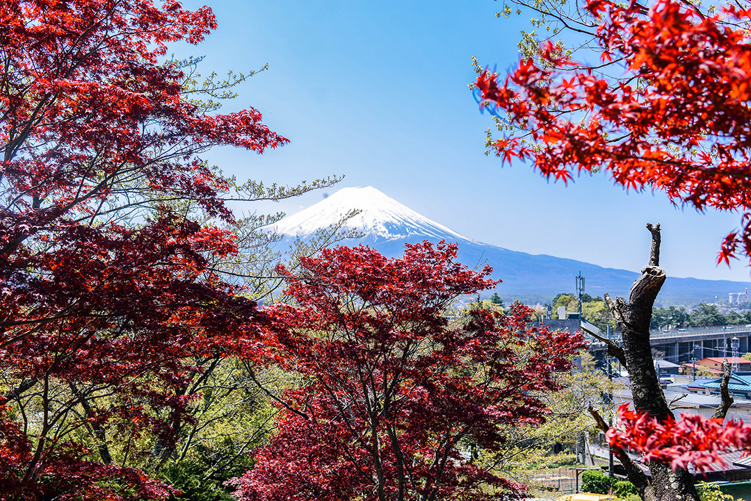 Chureito Pagoda | Best Mt Fuji Viewing Spots