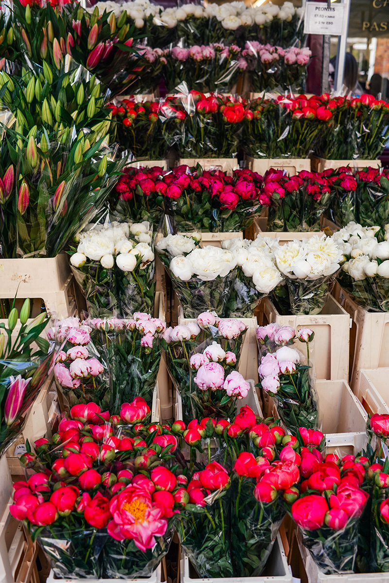 Columbia Road Flower Market | The Style Scribe